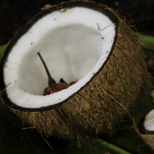 Traditional Coconut Offering